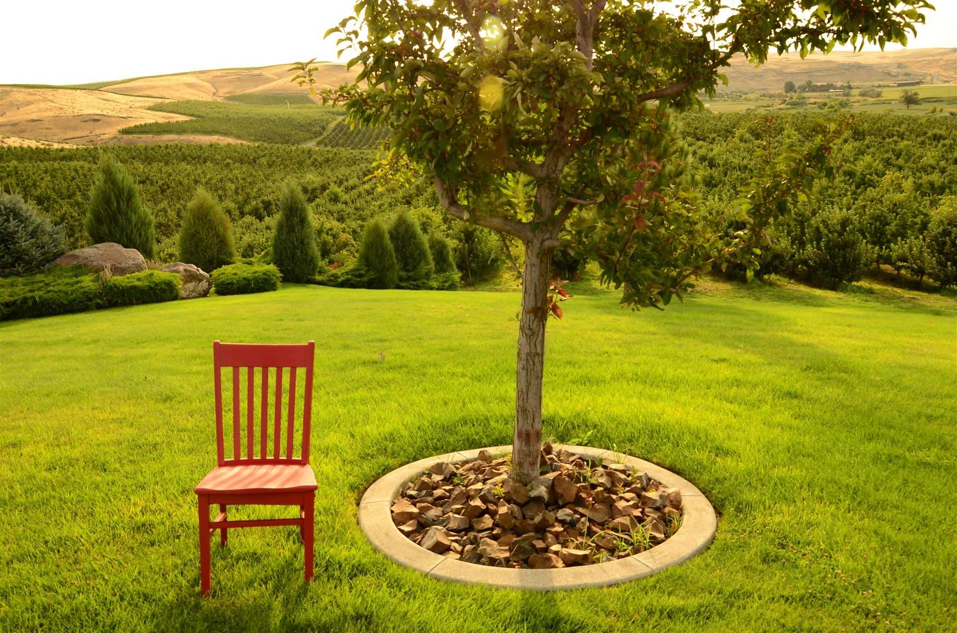 Red chair sitting on a well-manicured lawn next to a planted tree with a stonework ring a ways away from the current trunk; forested area and mountainous hills in the background