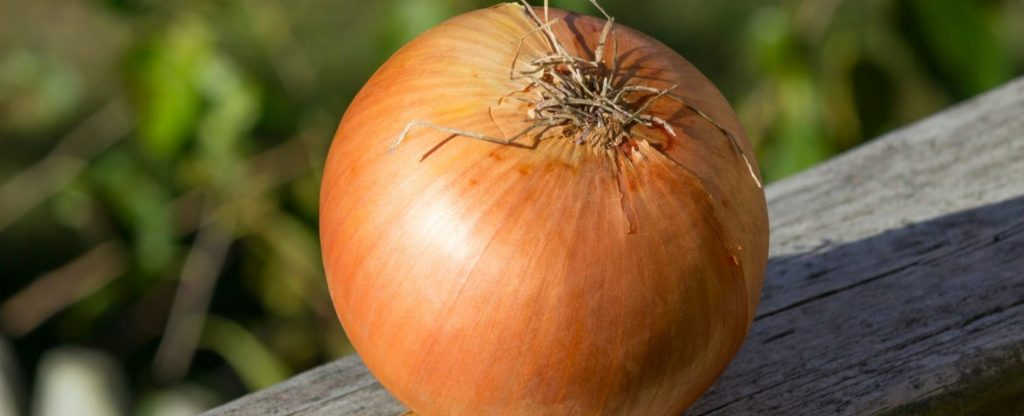 sweet-onion