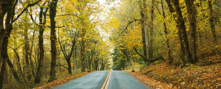fall-foliage-photo-by-moophoto-getty-images