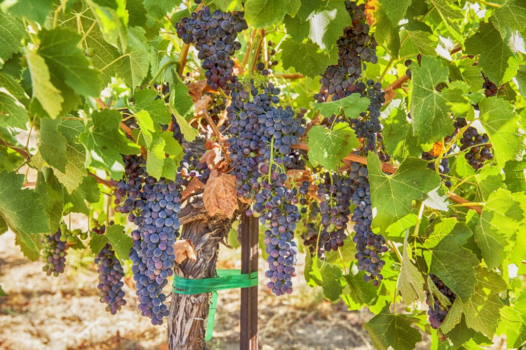 Wine Tours in Washington Wine Country Near Walla Walla