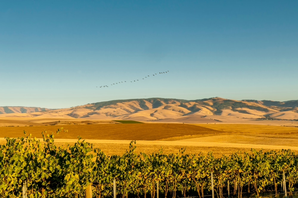 Our Walla Walla Bed and Breakfast is one of the Best Places to Visit in Washington State