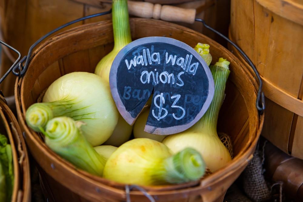 The famed Walla Walla onions on display at the Walla Walla Farmers Market