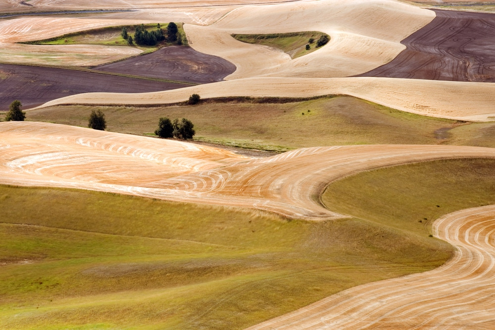 Beautiful fields of crops, showing the rich tradition of farming that is displayed at the Walla Walla Farmers Market every year